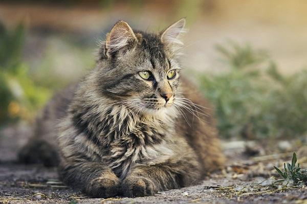 Liggende kat. Kattelem til glas giver din kat frihed. Glarmester Niels Juel Pedersen. Næstved