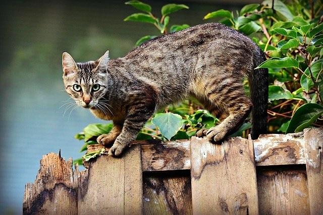 Kat på hegn. Egen kattedør i i glasdør. njpglas.dk - Næstved