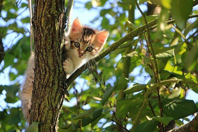 Kat i træ. Niels Juel Pedersen